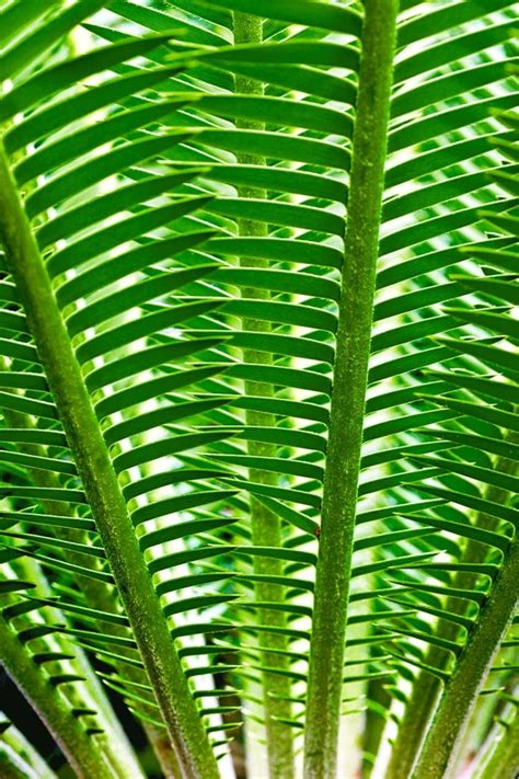 natural pattern pinterest the 25 best patterns in nature ideas on pinterest