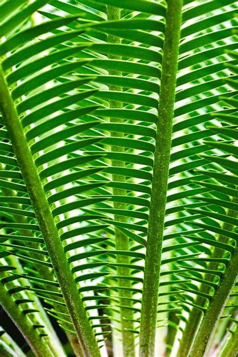 nature pattern pinterest best 25 patterns in nature ideas on pinterest nature