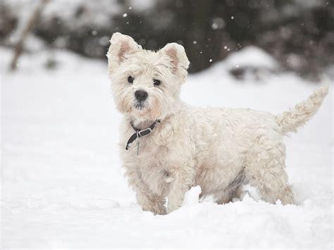 winter dogs winter houses noten animals