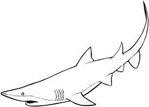 sharks coloring pages free shark coloring pages