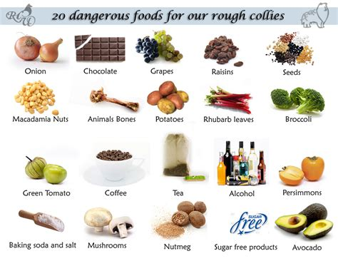 dangerous foods for dogs dangerous food for dogs thereliz flickr