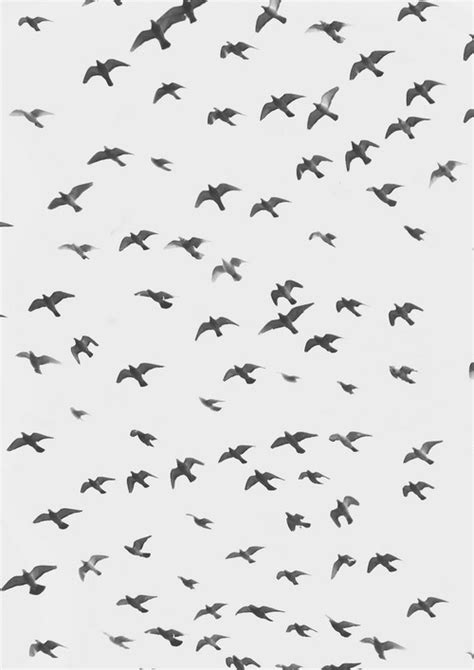 black and white bird pattern photography black and white birds sky vintage landscape