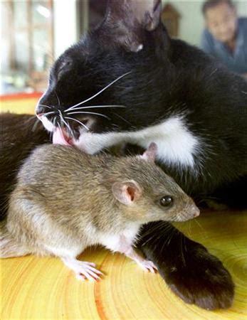 cat  mouse friends   world