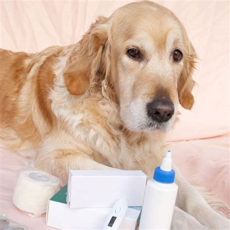 is aspirin safe for dogs aspirin and ibuprofen are human meds safe for dogs pets potential