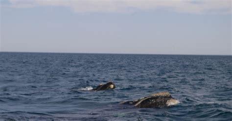he visto ballenas 8415685513 escribiendo en plata pen 237 nsula vald 233 s el lugar donde nacen las ballenas