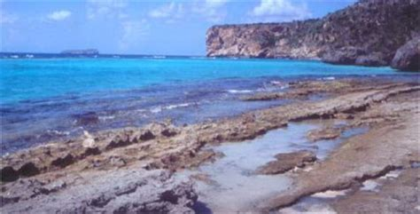 isla de mona de puerto rico florafauna datos reserva natural3 isla de mona taringa