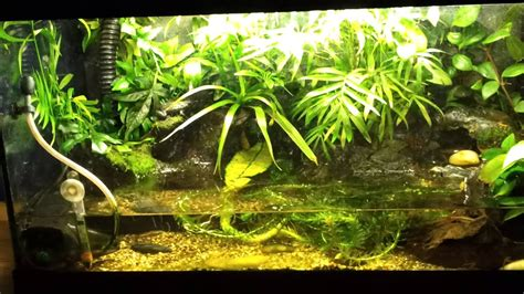 fire belly toad tank updated youtube