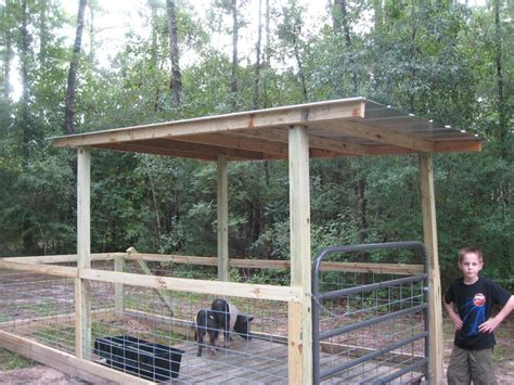 17 best images about pigs on sheds raising