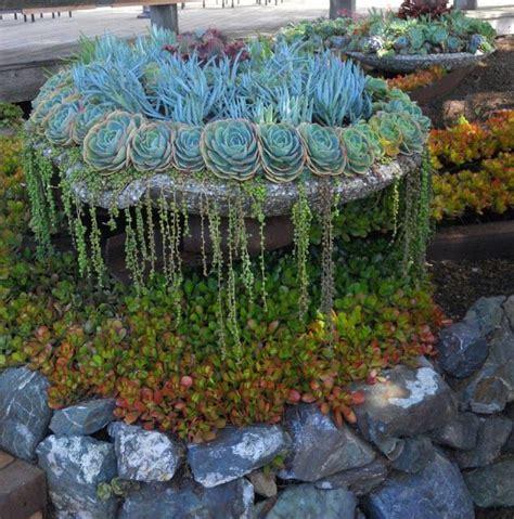 planter for succulents succulent planter succulents pinterest