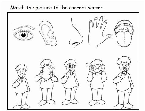 5 Senses Coloring Page Coloring Home Five Senses Free Coloring Pages