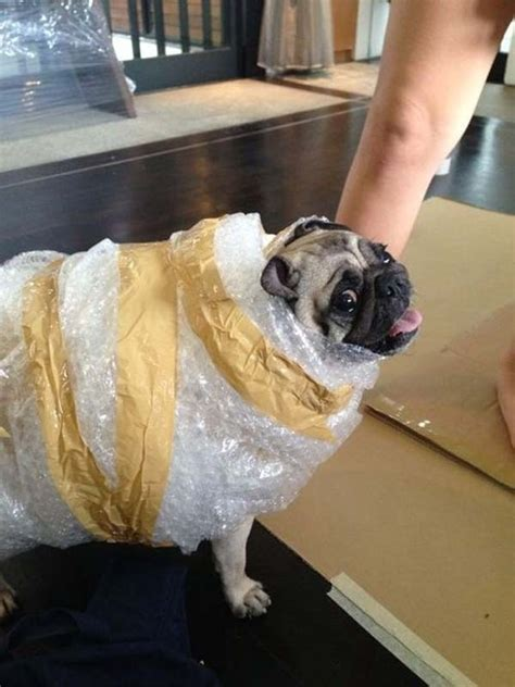 pug costumes for awesome costumes for pugs