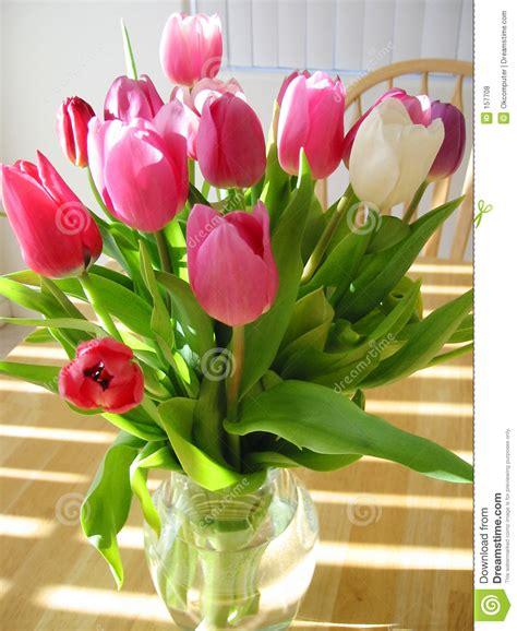 tulipani in vaso tulipani in vaso fotografie stock libere da diritti