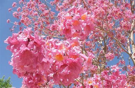 daftar nama bunga lengkap beserta gambar  penjelasannya