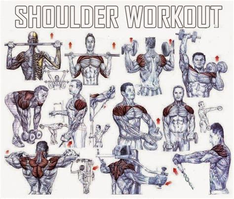 the best shoulder exercises for mass all bodybuilding