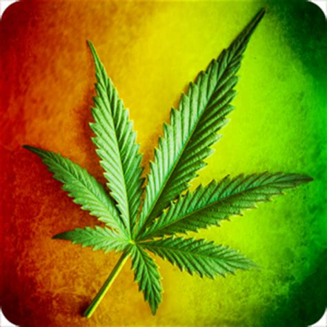whatsapp wallpaper weed marihuana and weed wallpapers android informer do you