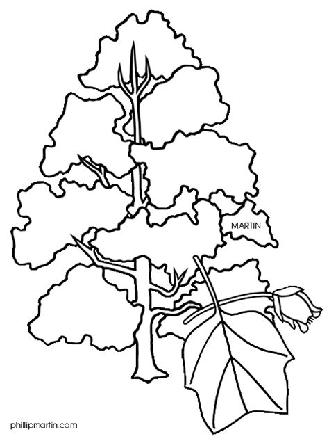 indiana state tree coloring page tennessee 20clipart clipart panda free clipart images