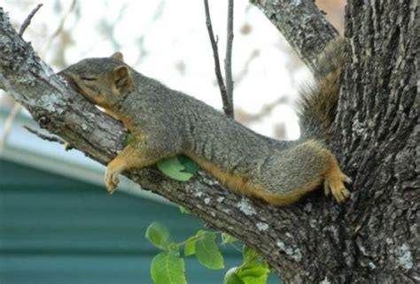 how to hunt squirrels in your backyard squirrel facts 101 frequently asked questions about squirrels