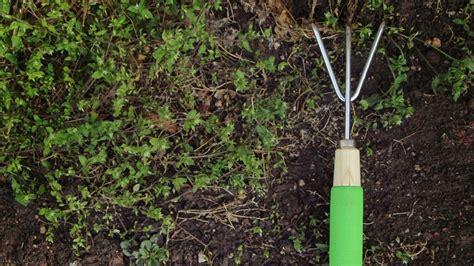 winter cover crop for vegetable garden winter cover crops benefit vegetable gardens angie s list
