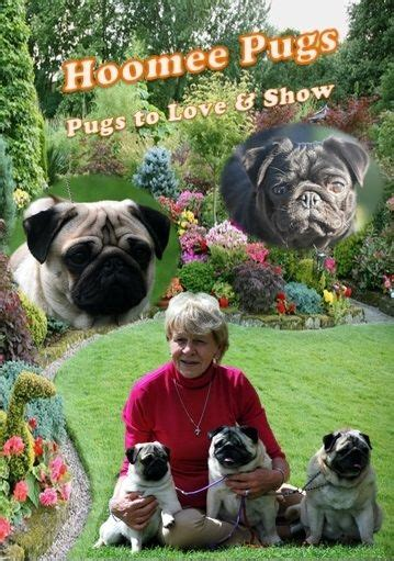 how much are pugs in australia hoomee pugs