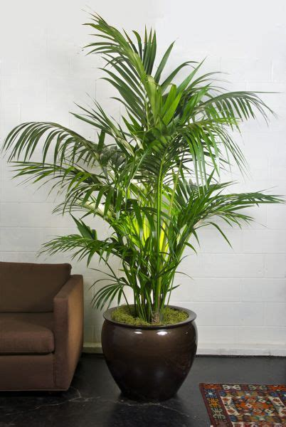 plants for indoors 25 best ideas about large indoor plants on pinterest