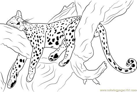 cheetah sleeping coloring page free cheetah coloring