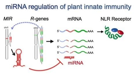 r proteins plants plants and microbes page 11 scoop it