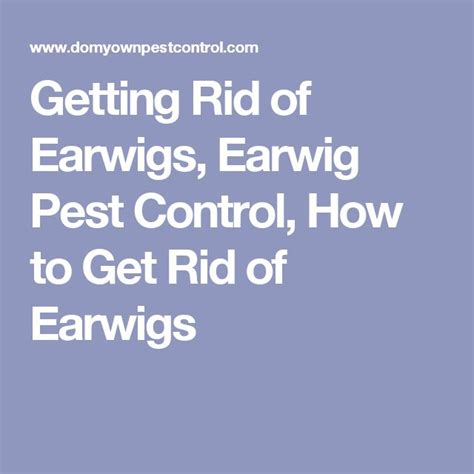 1000 ideas about earwigs on bee removal