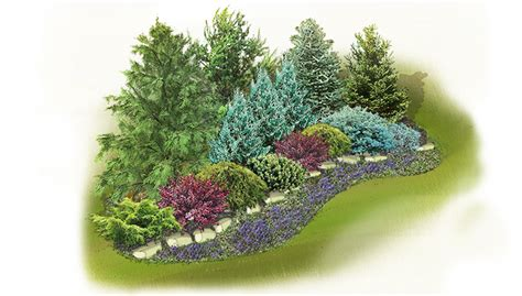 Evergreen Screen Landscape Plan