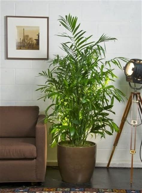 plants in house plants to improve indoor air quality bob vila s blogs