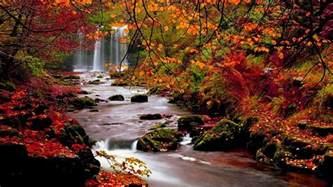 autumn trees nature landscape leaf leaves desktop