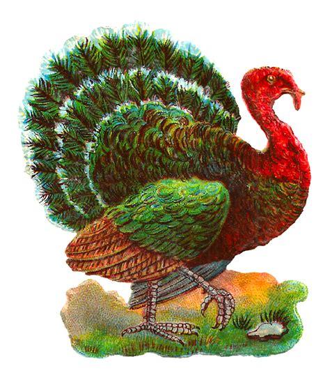 Thanksgiving Free Clip Vintage by Antique Images Vintage Thanksgiving Turkey Digital Bird