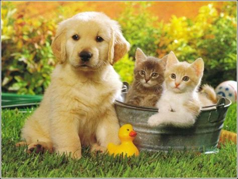small family dogs small family dogs with cats pet photos gallery 7gbxppybdr