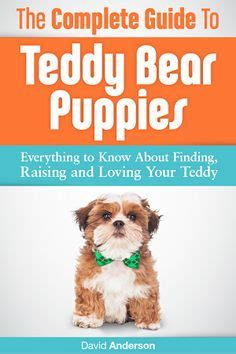 teddy puppies for sale in nc teddy puppy teddy breed information at 65 barking puppys