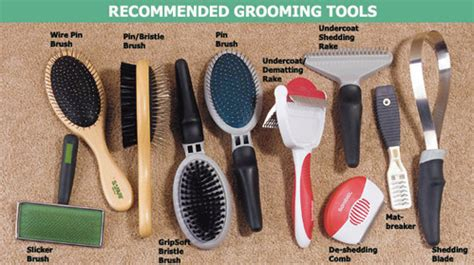 Must Have Tools for Well Groomed Pets