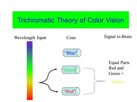 trichromatic theory of color vision next week covers everything about all sensory