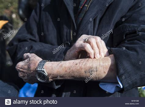 concentration c tattoo auschwitz concentration c stock photos