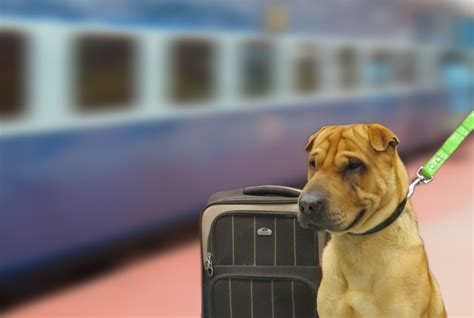 traveling with puppy railyatri tips to travel in with your pet