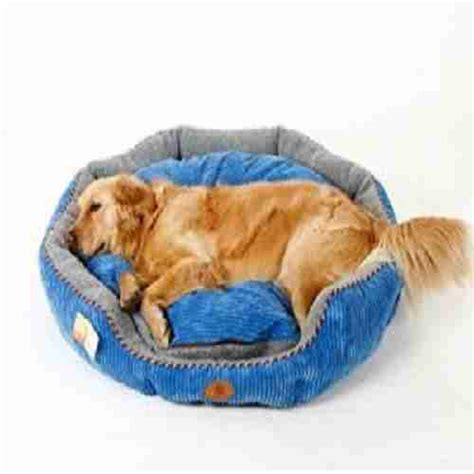 best bed for golden retriever best beds for golden retrievers top 4 puppy