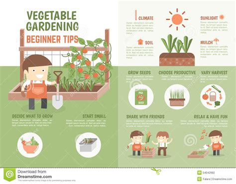 Infographic How To Grow Vegetable Beginner Tips Stock