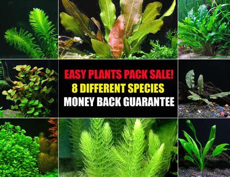 aquascape plants for sale aquascape plants for sale products aquarium plants for sale live aquarium plants