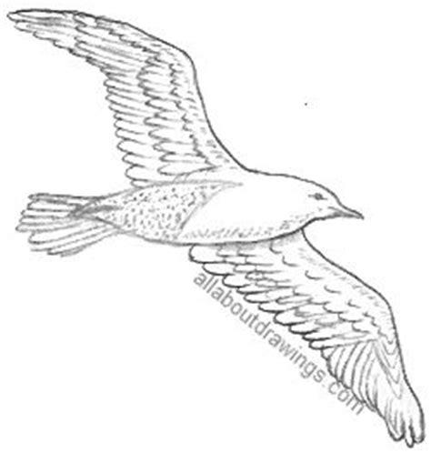drawings of a sea bird clipart best popular bird drawings