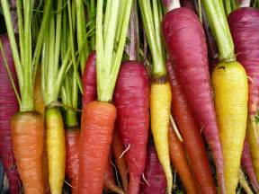 different colored carrots colorful carrots flickr photo
