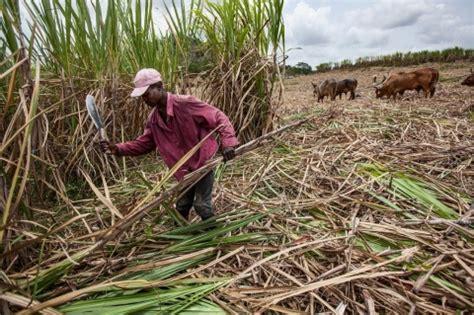 trade deal fails haitian workers  dr sugar al jazeera