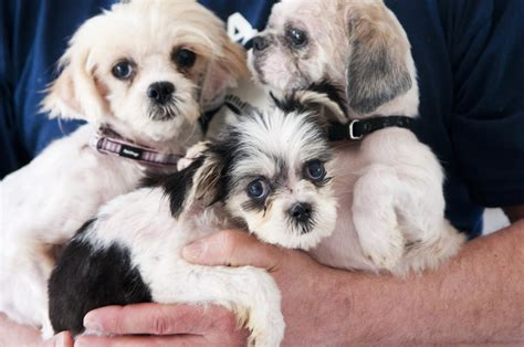 mlive puppies letter that leniency prevails if updating licensing for animal rescue
