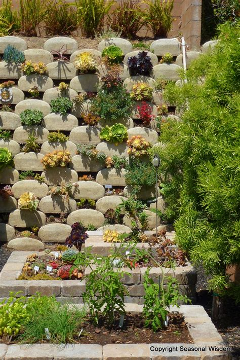 vertical succulent garden saves space looks great