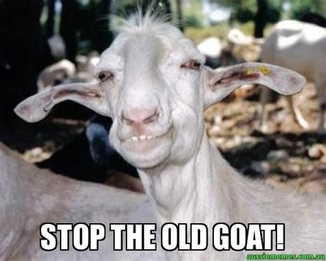 Goat Meme - old goat stop the old goat stop the old goat