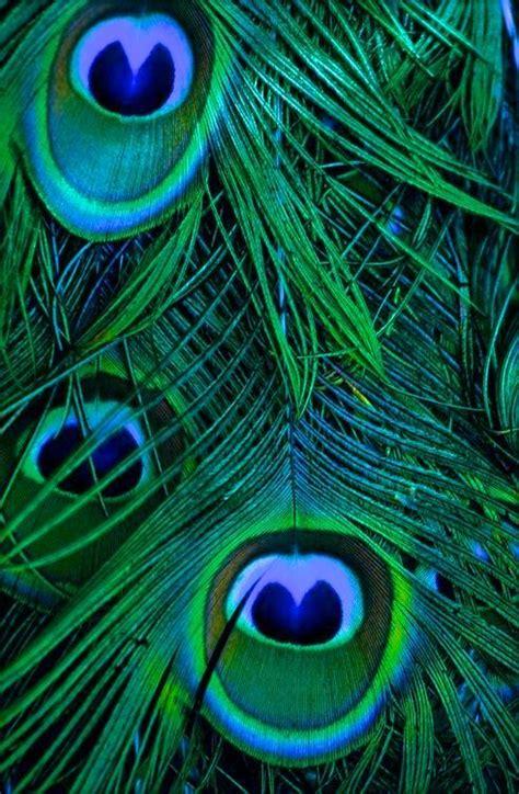 peacock green color peacock emerald green peacock peacock colors peacock