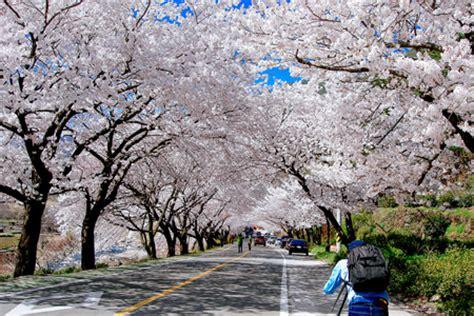 spring weather korea weather shore excursions asia