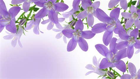 tapete lavendel lavendar wallpapers wallpaper cave
