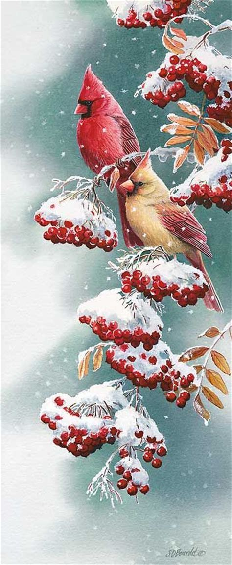 christmas welcome birds best 25 cardinals ideas on northern cardinal cardinal birds and the cardinals